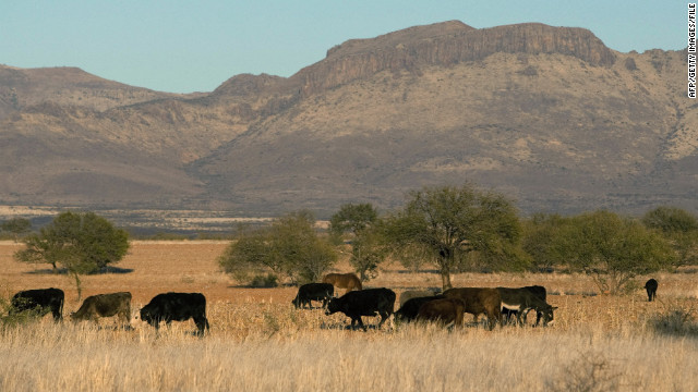 Until March 2010, cattle inspections were routinely done in Mexico, but due to the rise in drug cartel violence along the border, U.S. authorities transferred inspections to U.S.-based facilities.