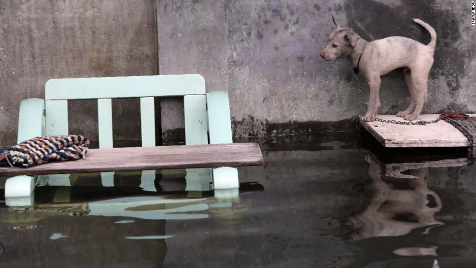 "A dog stands on a plank outside a flooded house a day after heavy rains and high tide caused flooding in Malabon City, Philippines, on Sunday, September 16. Parts of Manila were under 6 feet of water Saturday. More than 400 people had to flee their homes, officials said. <a href=""http://www.cnn.com/2012/08/07/world/gallery/philippines-flooding/index.html"" target=""_blank"">See photos of last month's flooding of Manila from monsoon rains.</a>"