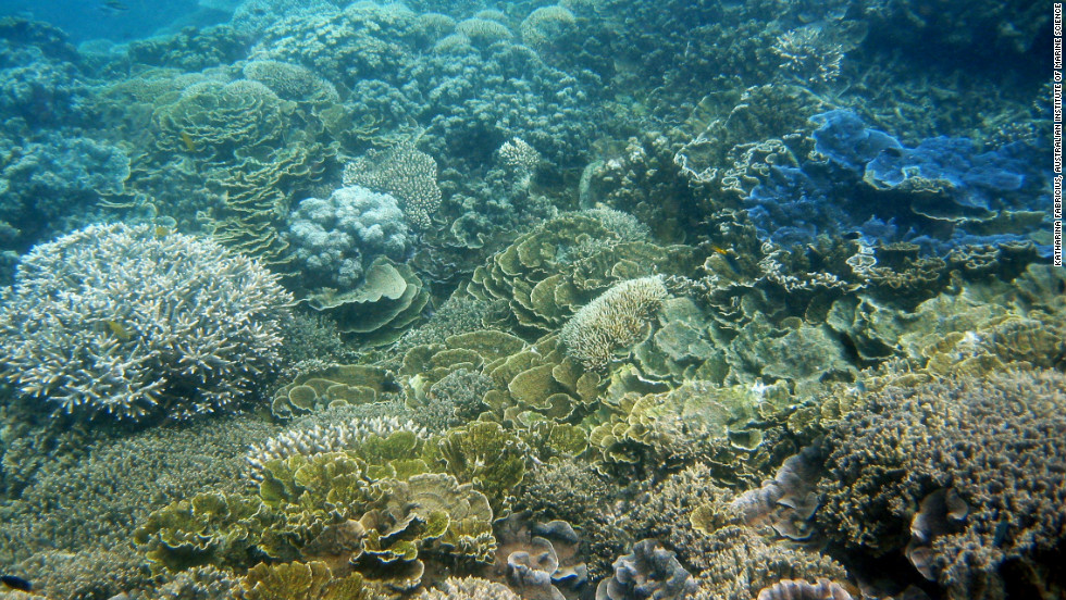 Coral decline in Great Barrier Reef 'unprecedented'
