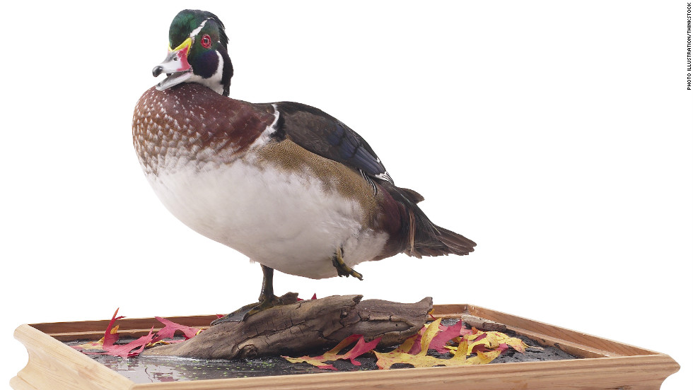 """Murray the Freezer Duck. He was literally a taxidermied black duck who lived in our freezer for years when my dad was a decoy carver. I miss Murray!"" —Elizabeth Bull"