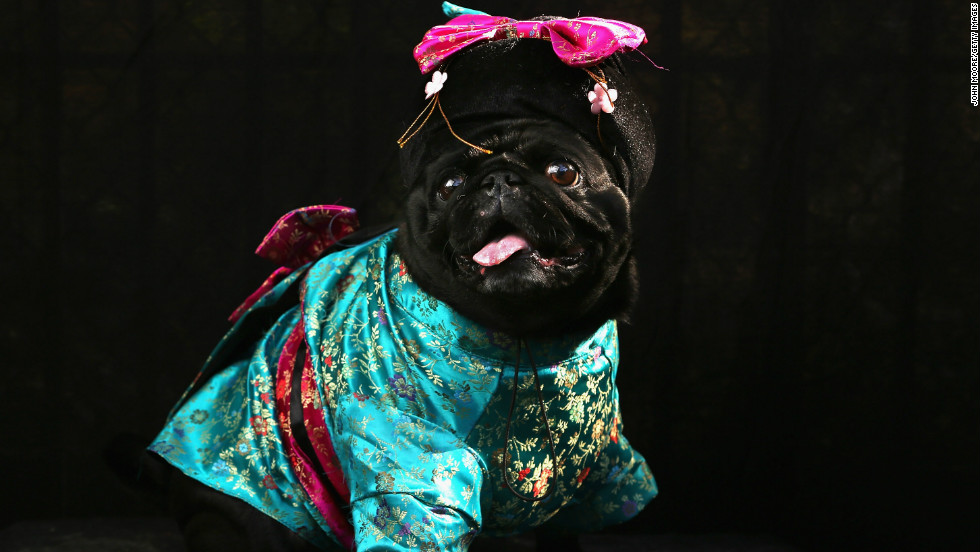 Penny, a Pug, poses as a Geisha at the Tompkins Square Halloween Dog Parade on October 20, 2012 in New York City.
