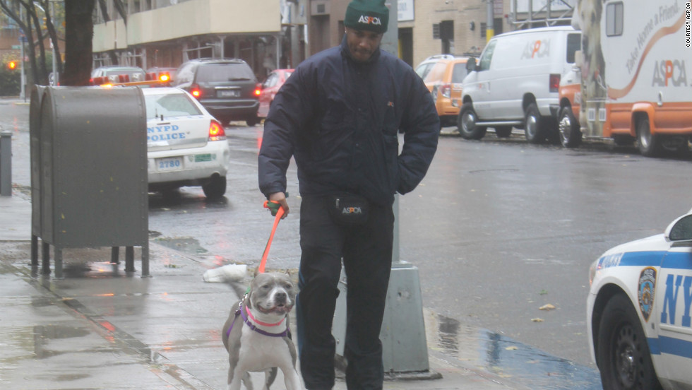 Another dog from the ASPCA Adoption Center gets a windy walk before Hurricane Sandy strikes.