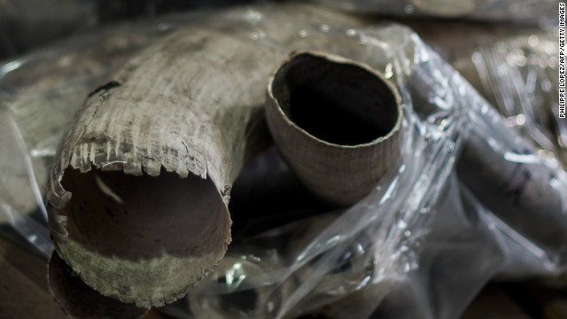 Seized pieces of unpolished tusks are displayed by customs officials in Hong Kong on November 16, 2012.