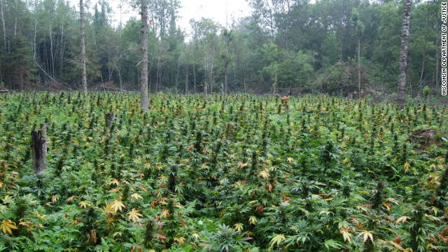 Wisconsin asks hunters to be on the lookout for marijuana for Weed plantation exterieur