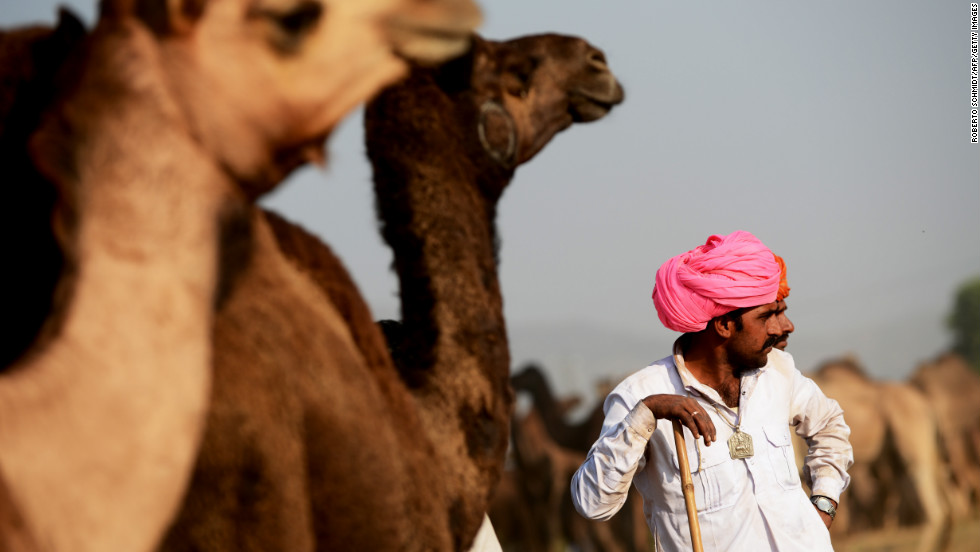 Camel owners wait for customers near their animals on Wednesday.