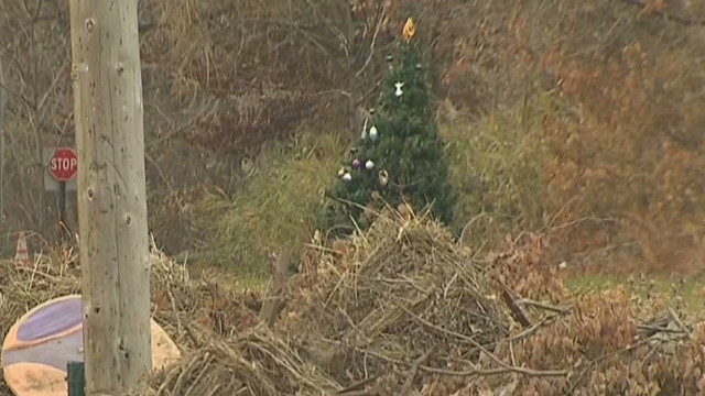 Sandy tree washes up, gets decorated