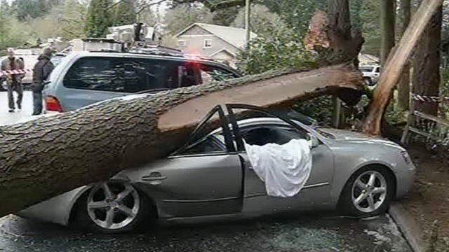 100 foot fir tree crushes a car in Vanby, OR
