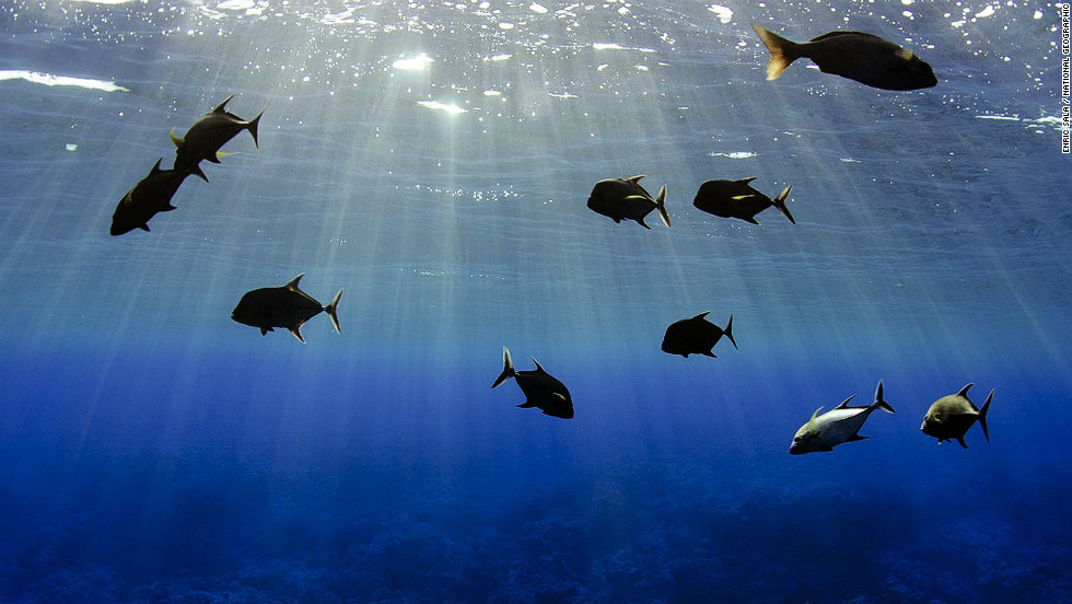 The waters surrounding the Pitcairn Islands in the South Pacific contain an abundant variety of marine life.
