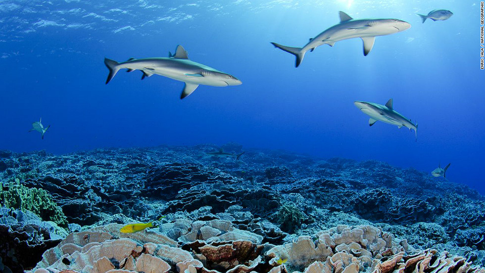 Divers found abundant populations of grey sharks and reef sharks in the pristine coral reef of Ducie atoll.