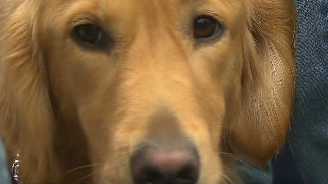 Comfort dogs bring joy to Newtown