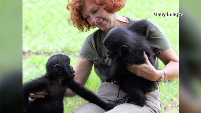 Conservationist saves endangered apes