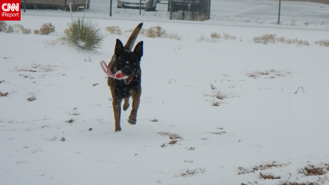 Charles A Ogin IV, an iReporter, sent this photo of a military working dog at Fort Bliss in El Paso, Texas, in the snow for the first time Thursday. El Paso got about 2 inches of snow.