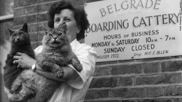 Cat-specific boarding operations, like this one from 1953, are still few and far between, but cats' needs are becoming a modern priority.