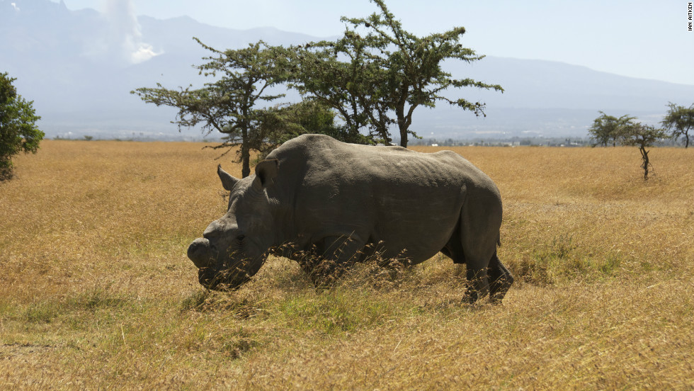 Rhino poaching rates have soared in recent years in parts of Africa amid growing demand in southeast Asia for the animals' horns.