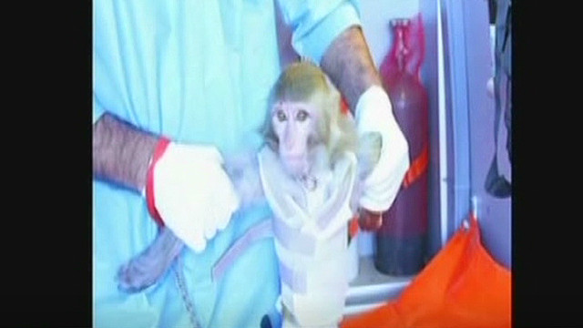Iran launches first monkey into space