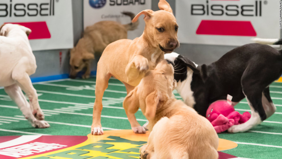 Puppy Bowl offers viewers plenty of tackling and ruff-housing.