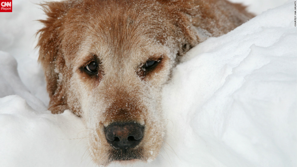 "After a massive blizzard hit the northeast,<a href=""http://ireport.cnn.com/docs/DOC-924263""> photographer Mia Orsatti</a> says she spent the next day photographing her neighbors and their pets digging out of more than 30 inches of snow in Hamden, Connecticut."