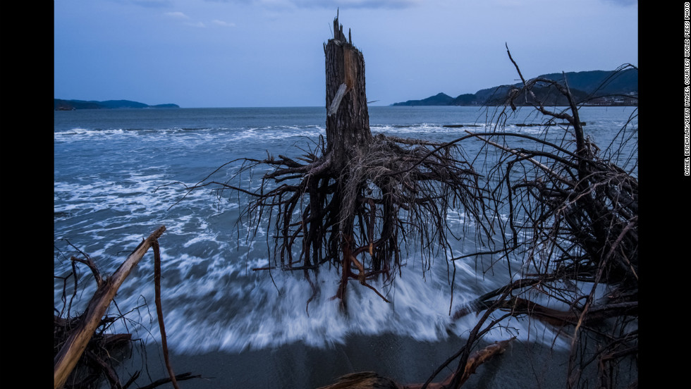 <strong>Third prize -- general news stories:</strong><br />Pine trees uprooted during the 2011 tsunami lie on the beach in Rikuzentakata, Japan, on March 7, 2012.