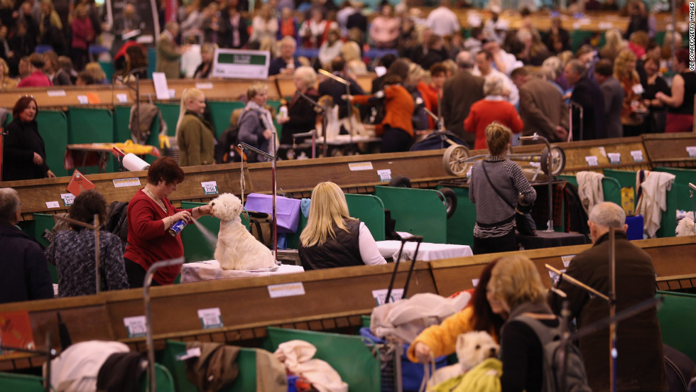 Owners prepare to show their dogs on the first day of the Crufts Dog Show.