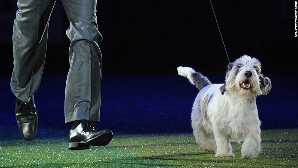 Gavin Robertson and Jilly do a victory lap after winning Best in Show on March 10, the final day of Crufts.