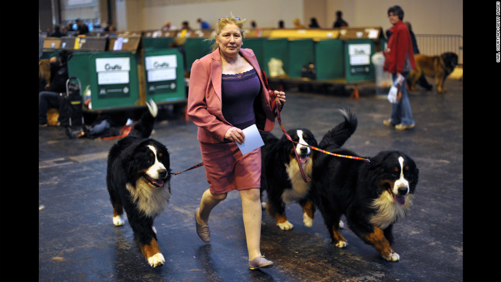 A woman walks her dogs backstage on March 10.