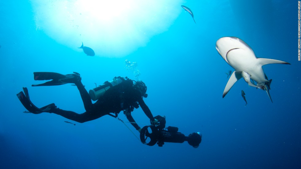 The team developed special equipment for the survey, a camera called the SVII. By taking a high definition picture every three seconds, it captures panoramic images of the reefs while recording their exact location with GPS technology.