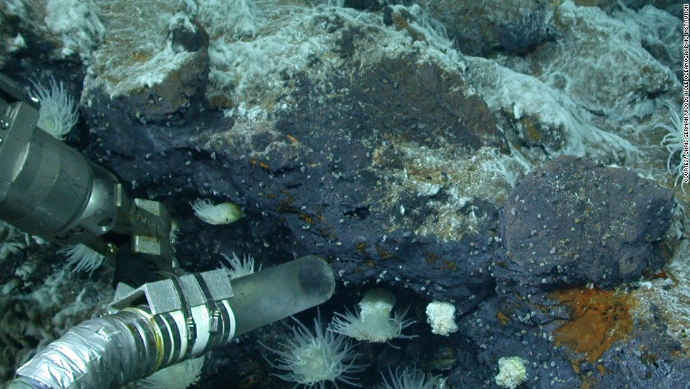 Fueled by chemical energy released from the earth's interior, lush ecosystems thrive at hydrothermal vents. Here, the suction-tube sampler of the Institution's ROV collects a sample of tiny snails.