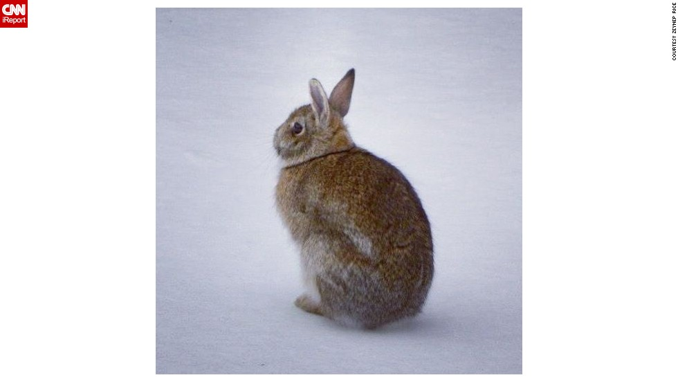 "This spring bunny wonders where the grass has gone as he sits on a snowy lawn in upstate New York. <a href=""http://ireport.cnn.com/docs/DOC-945612"">Zeynep Rice</a> and her husband spied on the furry fellow and pondered when spring will really begin."