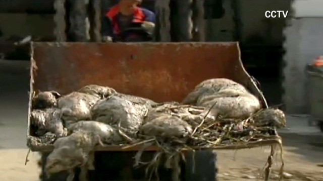 Why are ducks dying in China?