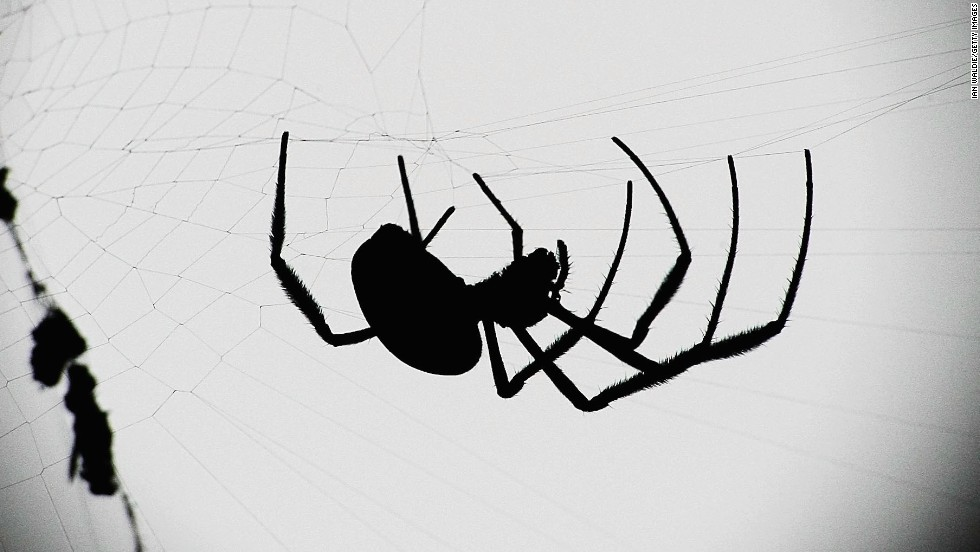 "Spiders are also associated with Halloween imagery, thanks in part to their historic association with <a href=""http://www.the-wisdom-of-wicca.com/halloween-symbols.html"" target=""_blank"">ancient religions</a>. The myths surrounding gods and supernatural beings who can predict the future or plot fate are often associated with spinning, thread, weaving and spider webs. But after all, spiders can be scary -- some bite! -- and spooky imagery is part of the Halloween tradition."