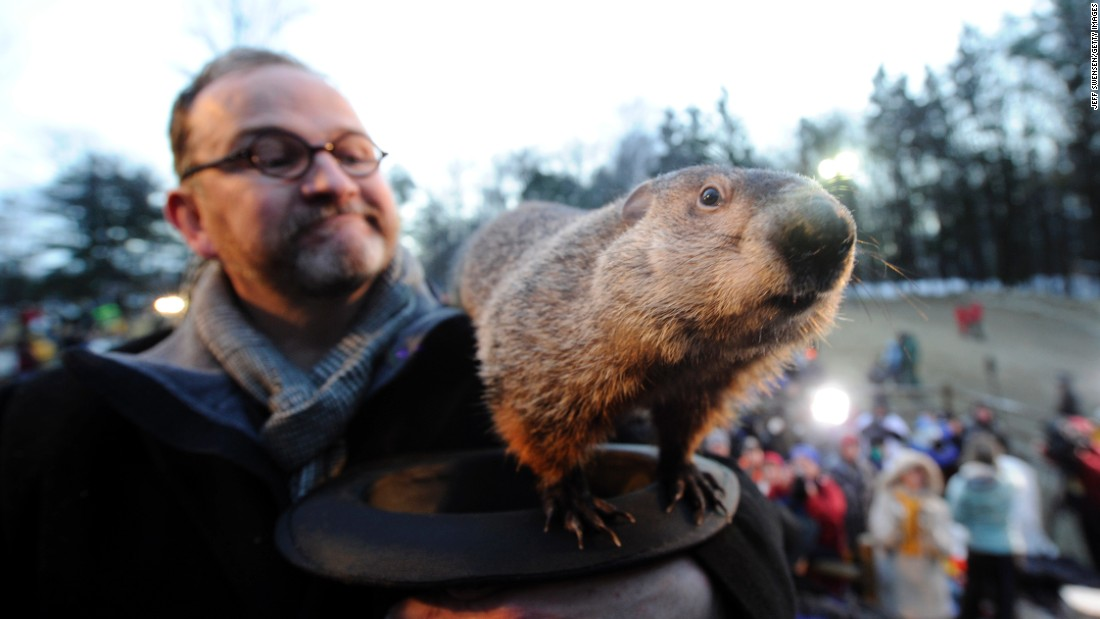 groundhog day inquiry digs up dirt on punxsutawney phil cnn this is the famous punxsutawney phil in punxsutawney pennsylvania lt a href