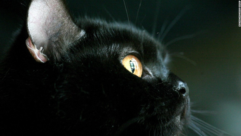 "Magical beasts have been part of Halloween since pre-Christian times. Hysterical<a href=""http://www.history.com/topics/halloween"" target=""_blank""> fear of witches (said to turn into cats</a>) in the middle ages linked felines to the holiday."