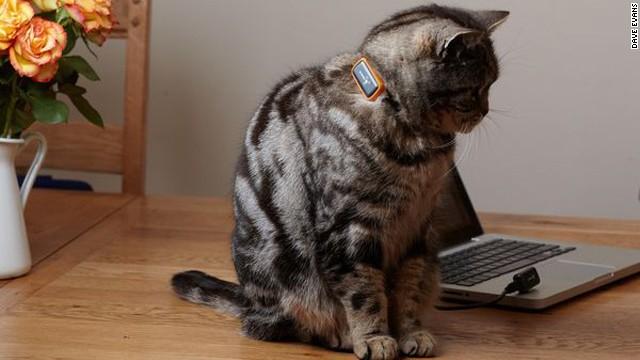 cat peeing everywhere sick