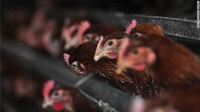 New deadly strain of bird flu in China