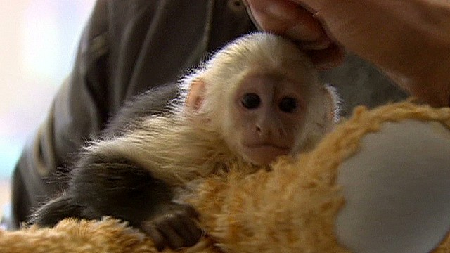 Justin Bieber's monkey seized in Germany