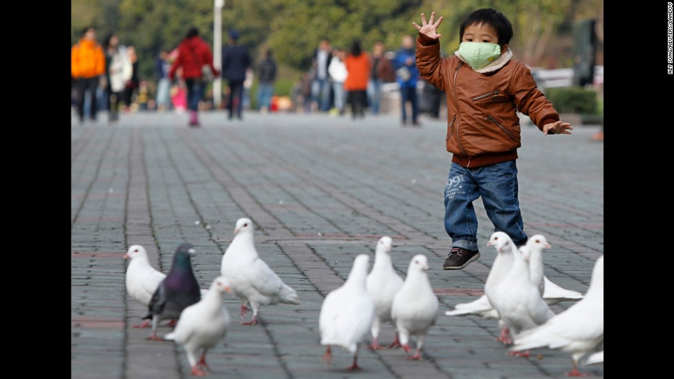 A boy looks at pigeons at a public park in People's Square in Shanghaion on April 6. Health authorities in China said on Saturday that the country's 16 confirmed H7N9 bird flu cases were isolated and showed no sign that it is transmitted from human to human, Xinhua News Agency reported.