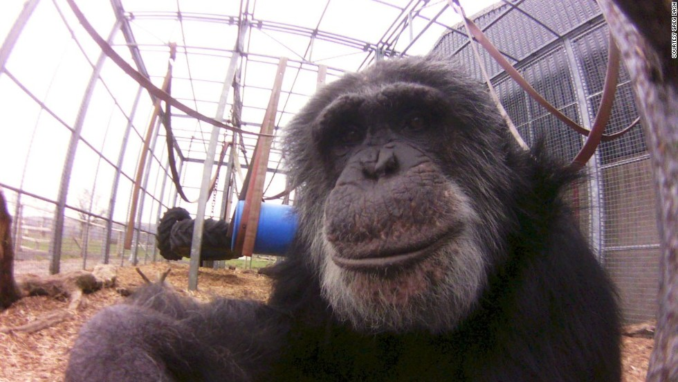 "A posing primate as captured with the Little Cyclops camera. Dash raised the money for producing the camera through crowd-funding website <a href=""http://www.indiegogo.com/projects/world-s-first-digital-lofi-fisheye"" target=""_blank"">Indiegogo</a>. Only 1,000 will be made in the first run and sold for a price of $100 each."