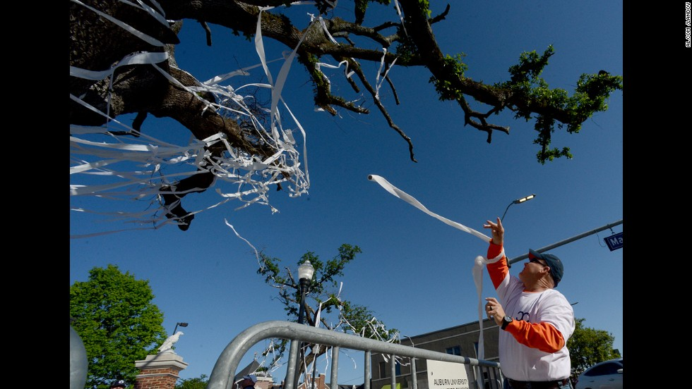 An Auburn fan rolls the tree on Saturday.