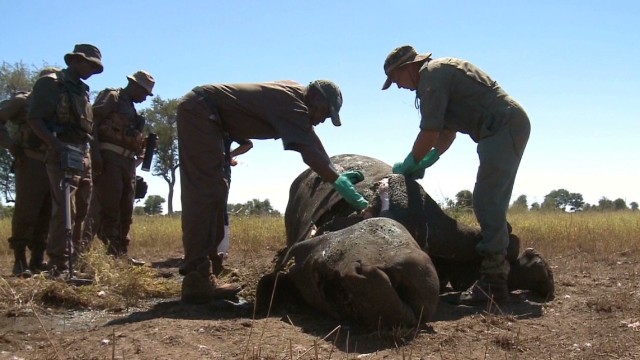 Rhino poaching 'relentless' in S. Africa