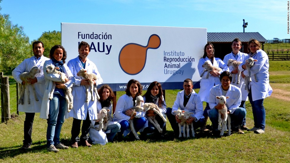 Researchers at Uruguay's Animal Reproduction Institute and the Pasteur Institute of Montevideo partnered in this endeavor. They say this is the first time in Latin America that transgenic sheep have been created.