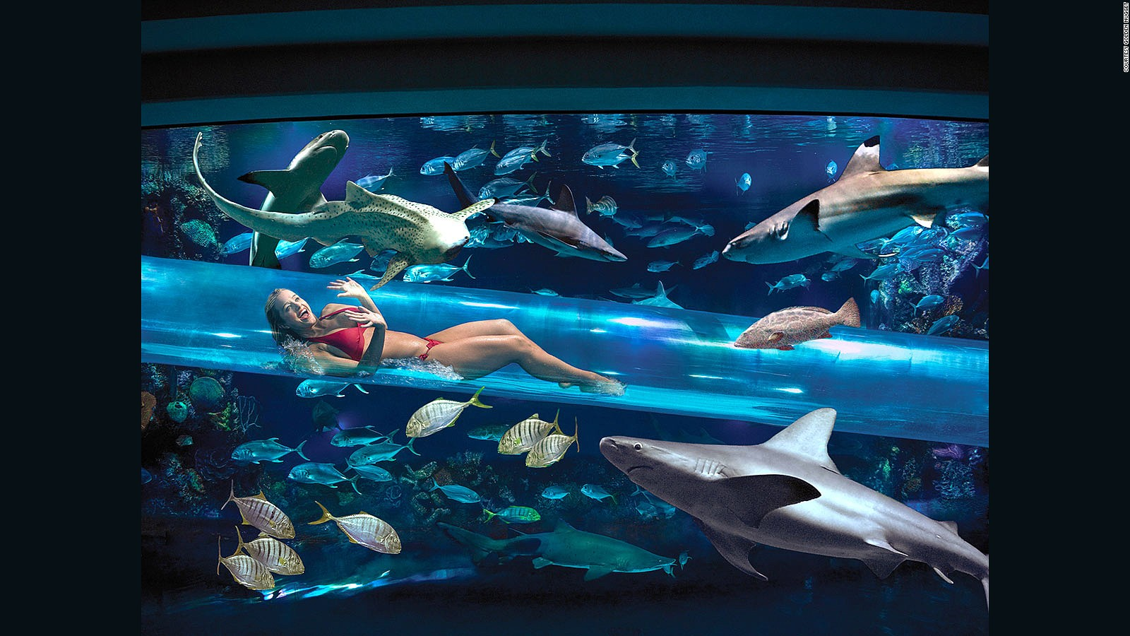 Americas Most Amazing Hotel Pools CNN Travel - 10 awesome aquariums where you can spend the night with sharks