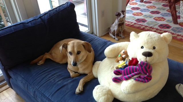 Dog Lemon gets used to a babycentric house