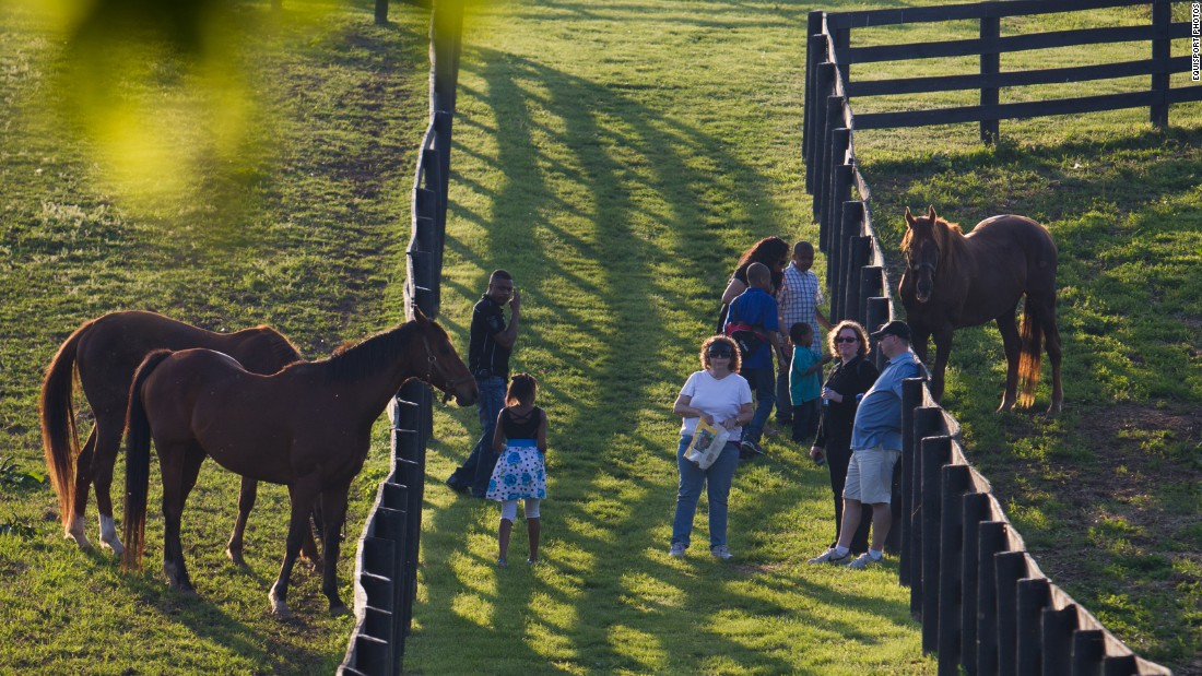 At the Old Friends farm in Georgetown, Kentucky, ex-racehorses enjoy their golden years and visits from tour groups.