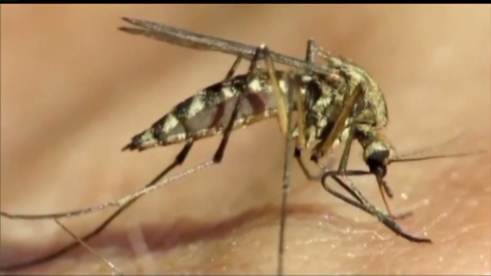What makes me so tasty? 5 myths about mosquito bites