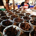 Laos crickets