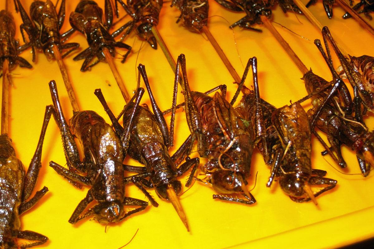 eating bugs a traveler u0027s guide cnn travel
