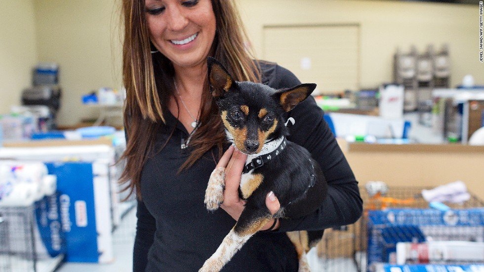 Volunteer Tiffany Pacheco holds a small dog at an animal shelter on May 23.