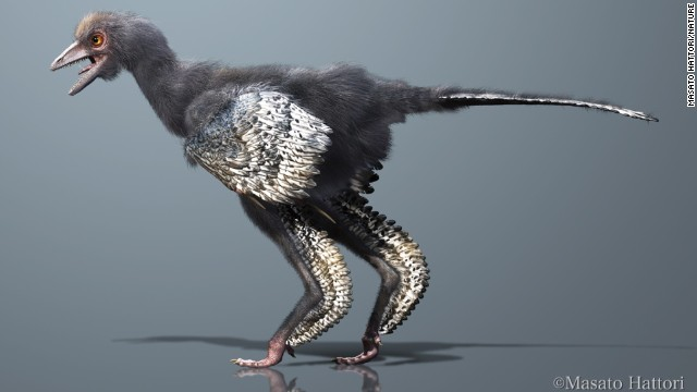 A reconstruction of Aurornis xui, a new species of dinosaur discovered in China.
