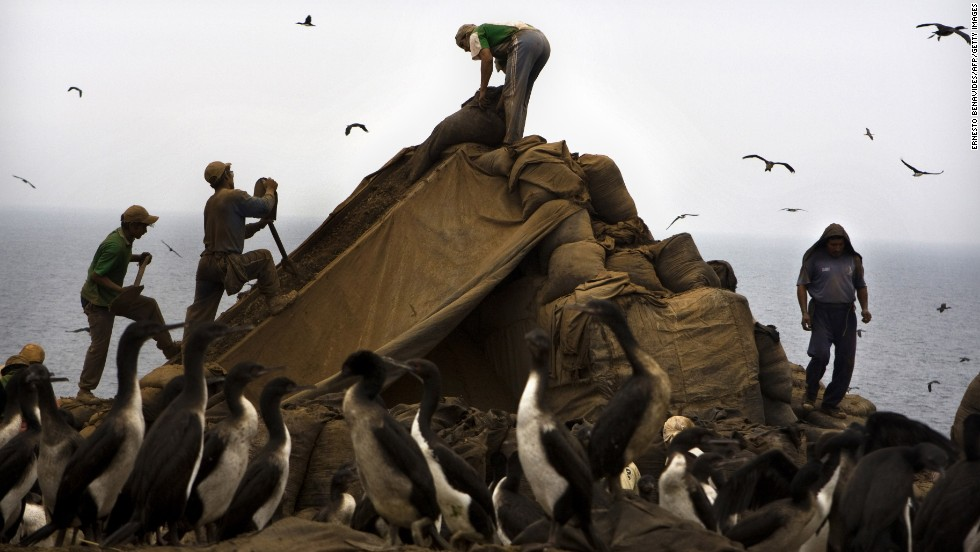 Workers drop sacks of guano into a strainer in Trujillo. Guano is an organic fertilizer once found in abundance on more than 20 islands off the Peruvian coastline.