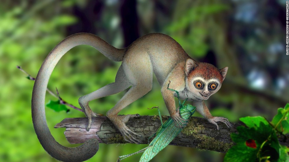 "<a href=""http://www.cnn.com/2013/06/05/world/asia/oldest-primate-skeleton/"" target=""_blank"">The oldest primate skeleton to date</a> was found. It belonged to a species named Archicebus achilles, which lived 55 million years ago (illustration pictured). In modern times, we learned about a cute new species of mammal: <a href=""http://www.cnn.com/2013/08/15/world/americas/new-mammal-smithsonian/"" target=""_blank"">The olinguito</a>."